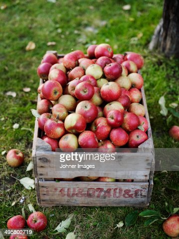 Apples in wooden box, Varmdo, Uppland, Sweden