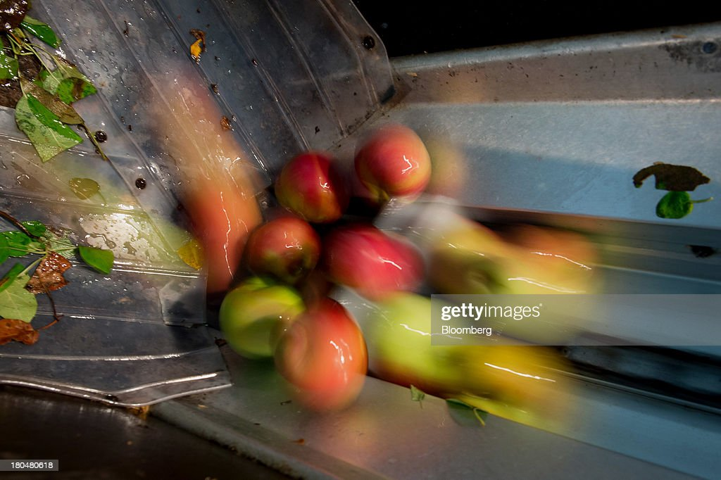 Apples move through a conveyor system to be cleaned and prepared for pressing into cider at Breezy Hill Orchard in Staatsburg, New York, U.S., on Thursday, Sept. 12, 2013. With apple harvest now officially underway across the state of New York, nearly 700 apple growers are expected to pick about 32 million bushels by the time harvest concludes in November, according to New York Apple Association (NYAA) reports. Photographer: Craig Warga/Bloomberg via Getty Images