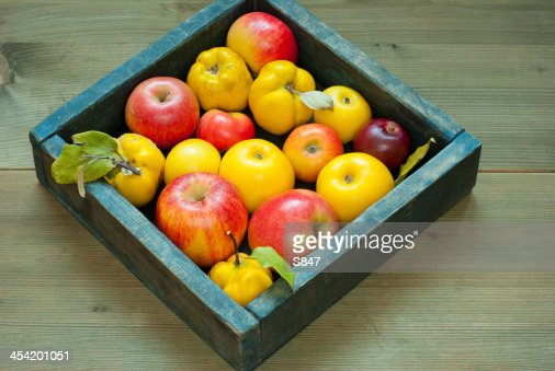 Apples, quinces : Stock Photo