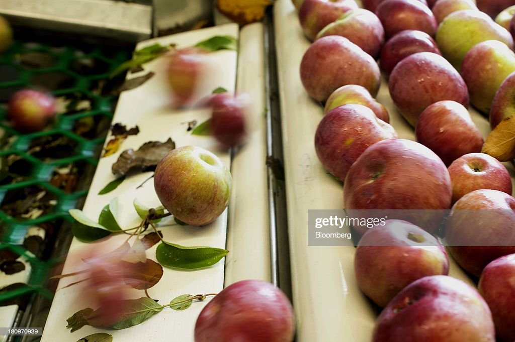 Apples roll off the conveyor belt onto the sorter in the processing center at MacQueen Orchards in Holland, Ohio, U.S., on Tuesday, Sept. 17, 2013. Ohio is one of the top ten apple-producing states in the U.S., which overall has about 7,500 apple producers who grow nearly 100 varieties of apples on approximately 363,000 acres, according to the U.S. Apple Association. Photographer: Ty Wright/Bloomberg via Getty Images
