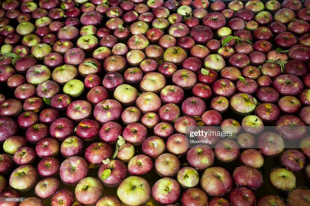 Apples sit in water in the processing center at MacQueen Orchards in Holland, Ohio, U.S., on Tuesday, Sept. 17, 2013. Ohio is one of the top ten apple-producing states in the U.S., which overall has about 7,500 apple producers who grow nearly 100 varieties of apples on approximately 363,000 acres, according to the U.S. Apple Association. Photographer: Ty Wright/Bloomberg via Getty Images