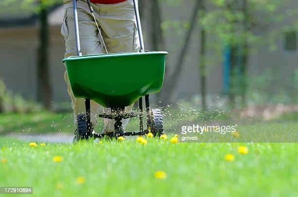 Application de feuilles et de l'alimentation animale à la pelouse.