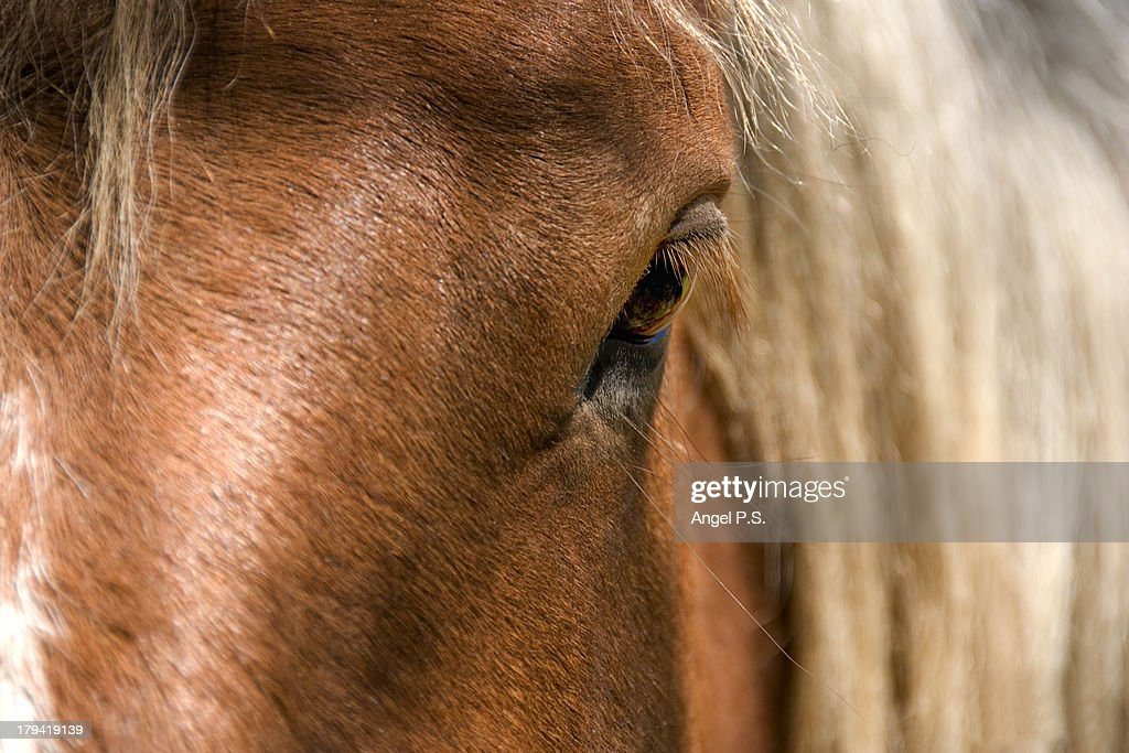 Approach to the head of a horse in the Pyrenees. : Stock Photo
