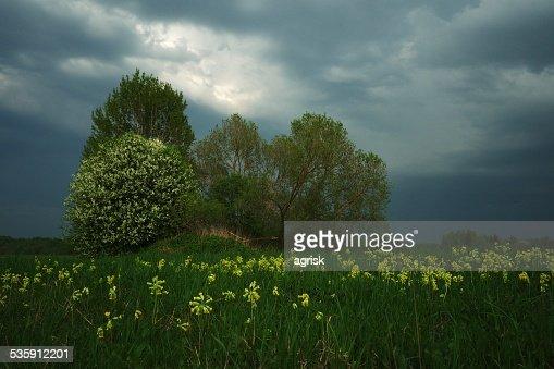 Aproximar Tempestade : Foto de stock
