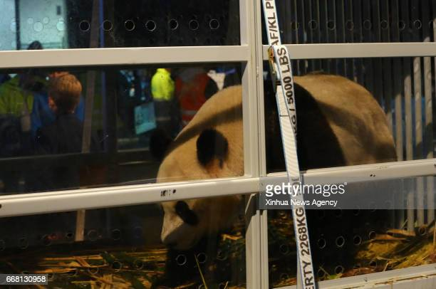 AMSTERDAM April 13 2017 A panda is seen at Schiphol airport in Amsterdam the Netherlands on April 12 2017 Wu Wen and Xing Ya two Chinese giant pandas...