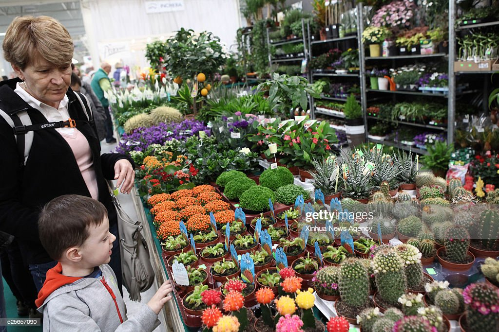BRATISLAVA, April 28, 2016-- A little boy looks at potted plants during the International Flower Fair in Bratislava, capital of Slovakia, April 28, 2016. The 37th International Flower Fair, Flora Bratislava 2016, opened its gates here on Thursday. Some 185 exhibitors from Slovakia, Hungary, France, Poland, Germany, Italy, the Czech Republic and the Netherlands are presenting their floral and garden products and services.