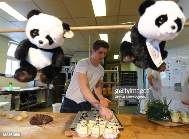 RHENEN April 5 2017 A man makes 'panda cakes' in a pastry house of Rhenen the Netherlands on April 5 2017 The 'Pandasia' at Ouwehands Zoo in the...