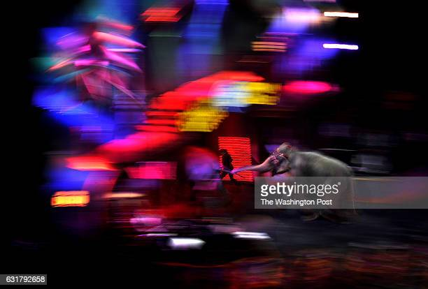April the elephant heads into the backstage area with her handler after the elephant group was introduced early in the show at the Verizon Center We...