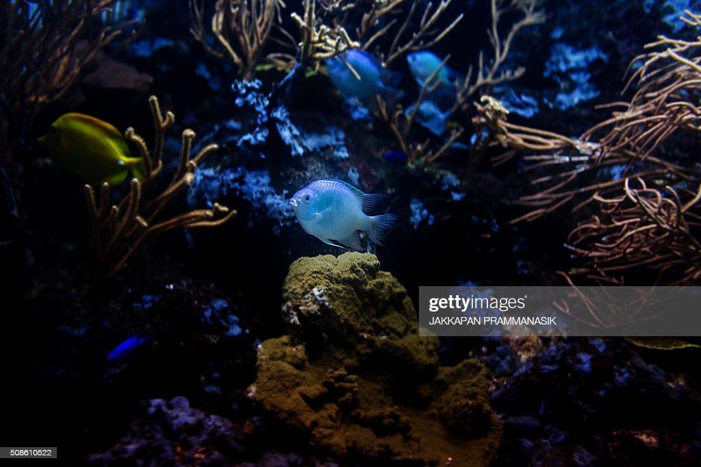 Aquarium fish : Stock Photo