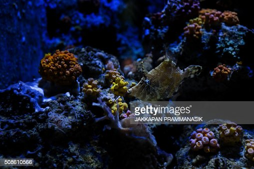 Aquarium fish : Stock Photo