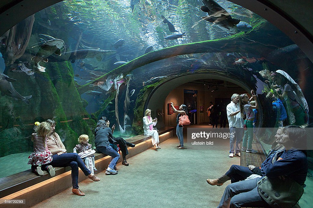 Aquarium Sf Golden Gate Park 1000 Aquarium Ideas