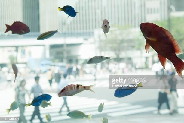 Aquarium in front of crossing