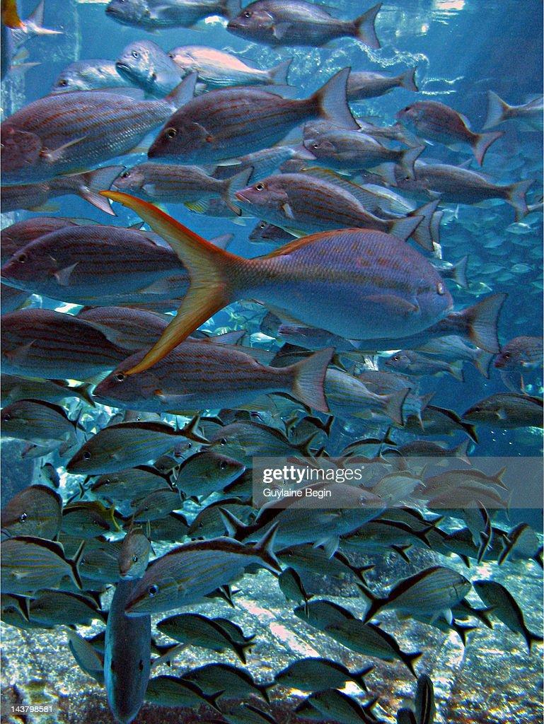 Aquarium : Stock Photo