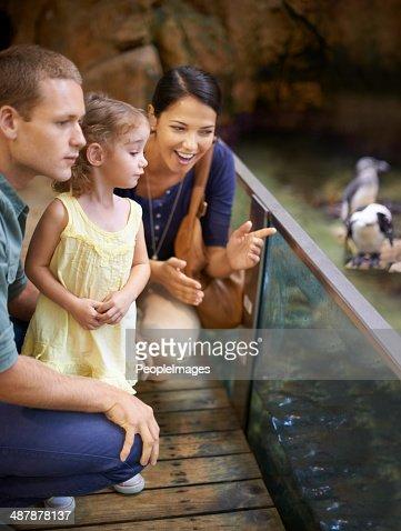 Aquariums- a paradise for kids