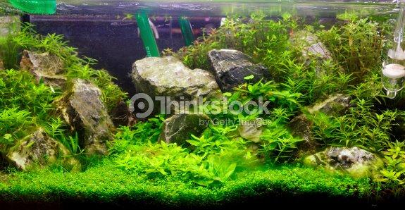 Plant aquascaping de laquarium deau douce photo thinkstock - Decoration pour aquarium d eau douce ...