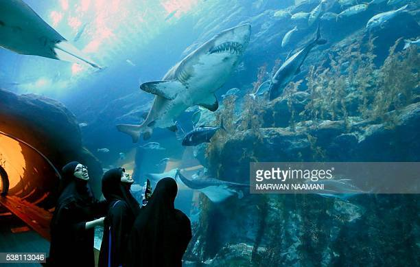Arab tourists look at a shark in a viewing tunnel at the aquarium at the Dubai Mall on June 1 2016 in the Gulf emirate of Dubai As if its opulent...