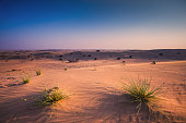 Arabic desert in the evening. Clear blue sky over sand dunes. Desert in Dubai, united arab emirates.