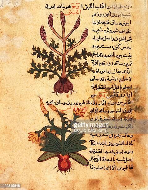 Arabic manuscript 16th century Abu Gaafar alGhafiki Fawaeyd elAashab 1582