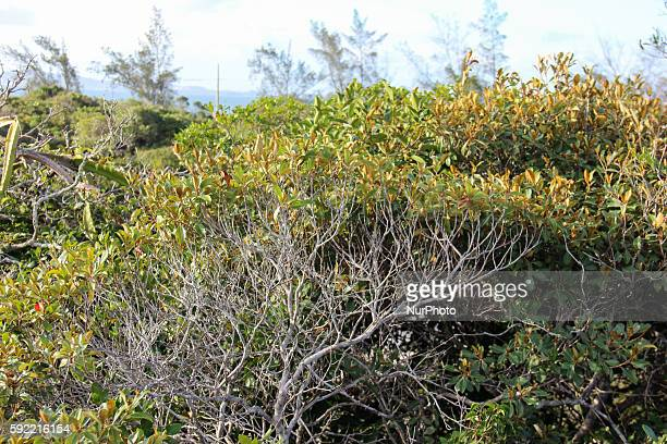 Cacti bromeliads and twisted branches are part of the vegetation which also has lush flowers The fauna is very rich but most of the animals in the...