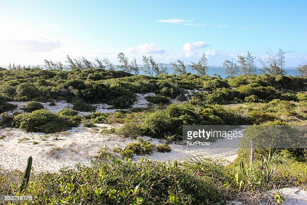 Costa do Sol State Park created in 2011 to preserve the remnants of Atlantic Forest in the Lake District on the northern coast of the State of Rio de...