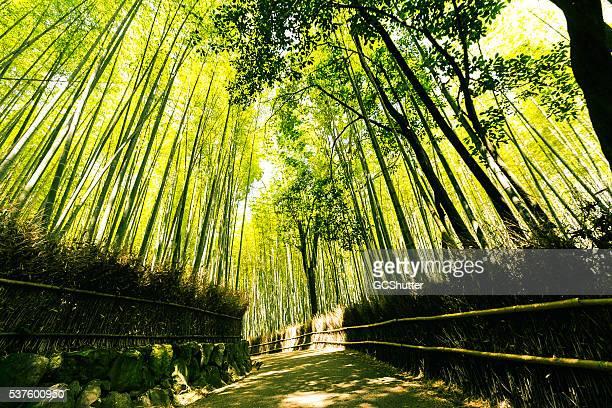 嵐山竹林、京都,日本