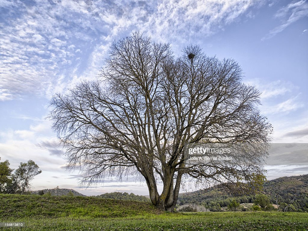 Arbol en invierno stock photo getty images for Arboles en invierno