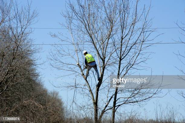 Arborist hard at work
