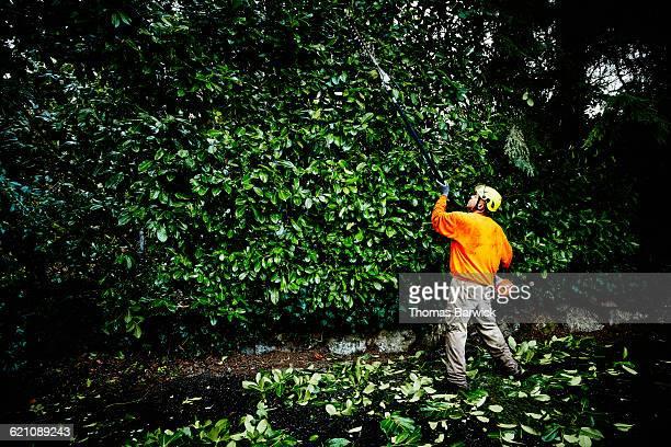 Arborist using pole saw to trim hedge