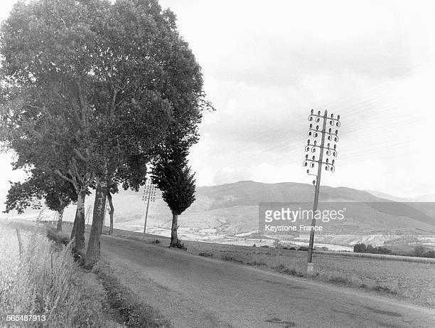 Arbres et pylônes en bois avec de nombreux isolateurs en verre pour tenir les câbles conducteurs le long d'une route du pays Basque en France circa...