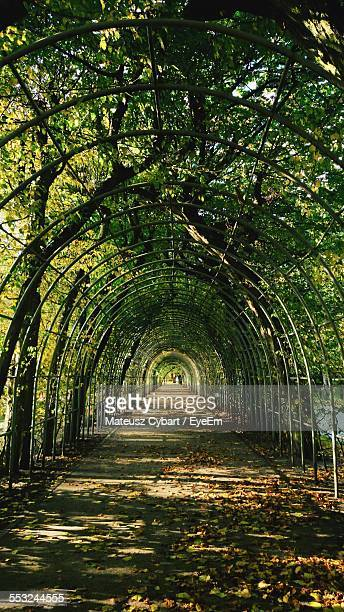Arch Walkway In Park