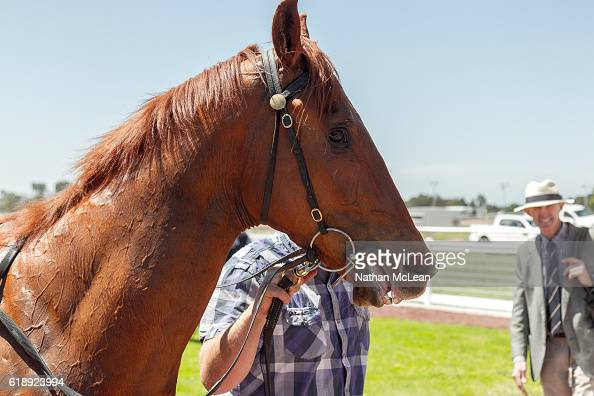 Archie Luxury after winning Latrobe City 3YO Maiden Plate at Traralgon Racecourse on October 29 2016 in Traralgon Australia