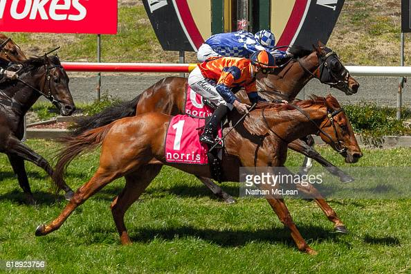 Archie Luxury ridden by Daniel Stackhouse wins Latrobe City 3YO Maiden Plate at Traralgon Racecourse on October 29 2016 in Traralgon Australia