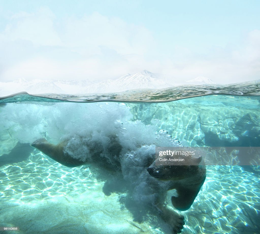 arctic dive  : Stock Photo