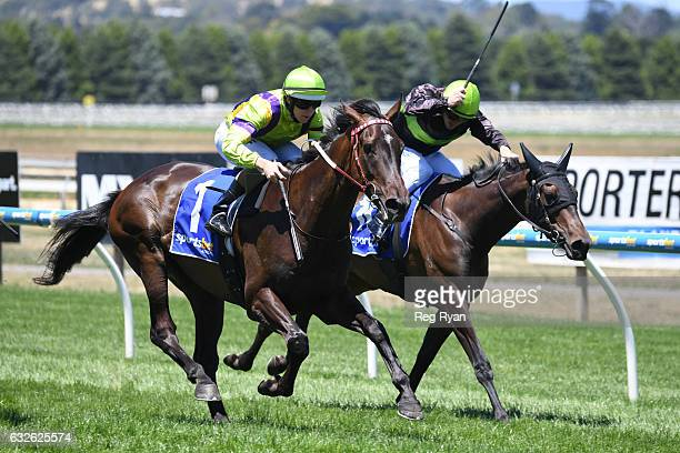 Arctic Flow ridden by Damian Lane wins The Mocha Shop 3YO Maiden Plate at SportsbetBallarat Racecourse on January 25 2017 in Ballarat Australia