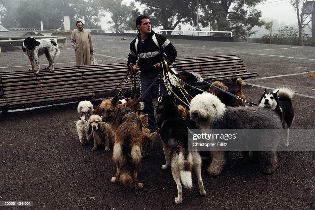Argentina, Buenos Aires, Dog handler walking dogs : Stock Photo