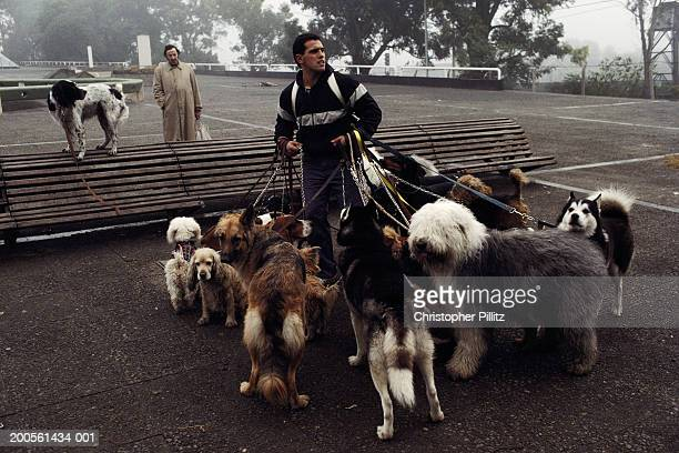 Argentina, Buenos Aires, Dog handler walking dogs