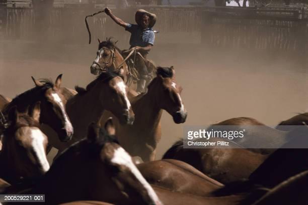 Argentina, gaucho herding horses on ranch
