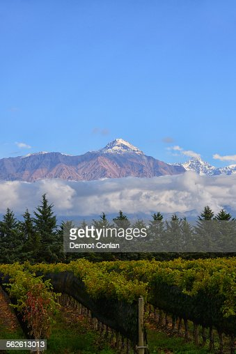 Argentina, Mendoza, Andes, View of vineyard with mountain on background