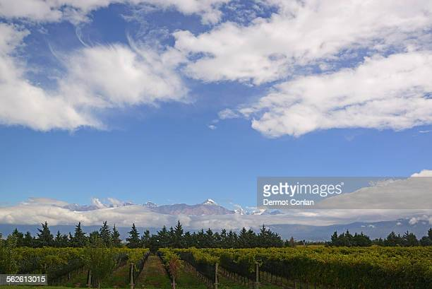 Argentina, Mendoza, Andes, View of vineyard with mountains on background