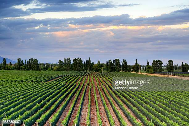 Argentina, Mendoza, Malbec Grape Wineries