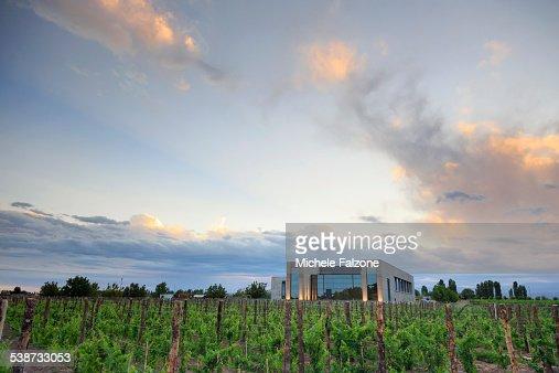 Argentina, Mendoza, Malbec Grape Wineries
