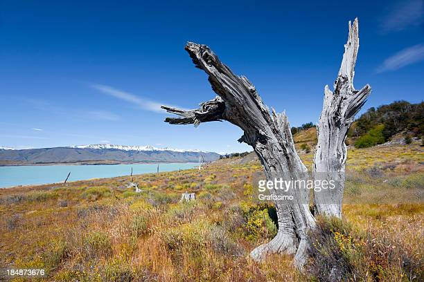 Argentina Patagonia Lago Argentino Brazo Rico
