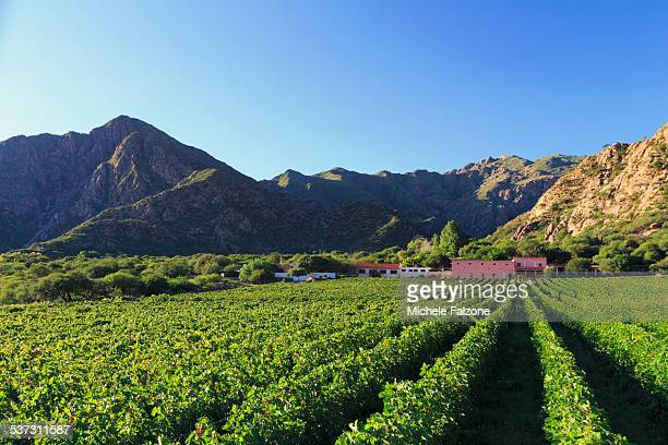 Argentina, Salta, Torrontes Grape Wineries