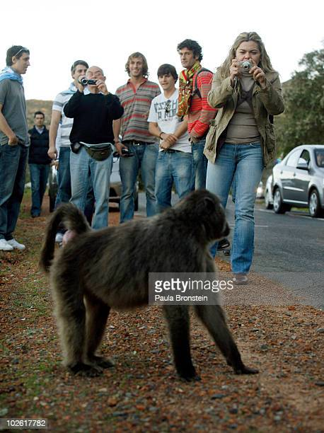 Argentinian tourists take a day off from game action as they grab shots of baboons taking over the road July 3 2010 in Capetown South Africa...