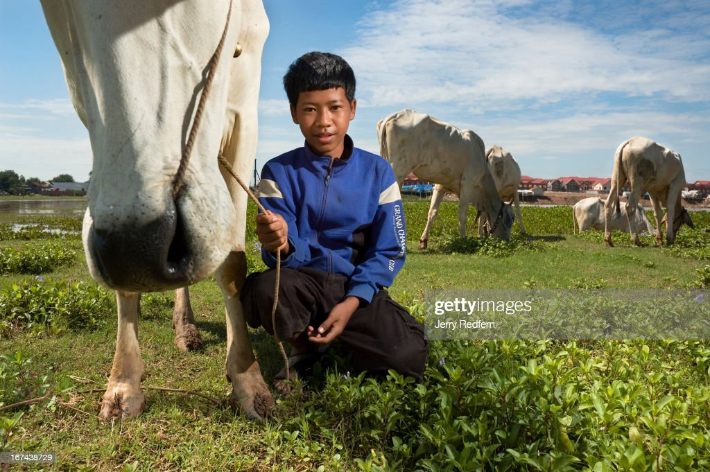 Ari Pin Ly, 13, tends his family's cows in a grassy lot on the outskirts of Phnom Penh. His father is dead and his mother works at a small shop, so the cows are a form of insurance. Ari Pin Ly has two younger sisters and a younger brother. The vast majority of Cambodian children work. Their labor is imperative for their survival and the survival of their families. In rural areas, kids are expected to work beside their parents on farms. In cities, they are sent out to sell flowers, drinks or shine shoes for extra money. Everywhere, as soon as they are able, children are expected to take care of their younger siblings and take up difficult family chores, work that is usually reserved for parents or servants in the developed world. In Cambodia, kids work everywhere, and form a significant, underreported part of the country's economy..