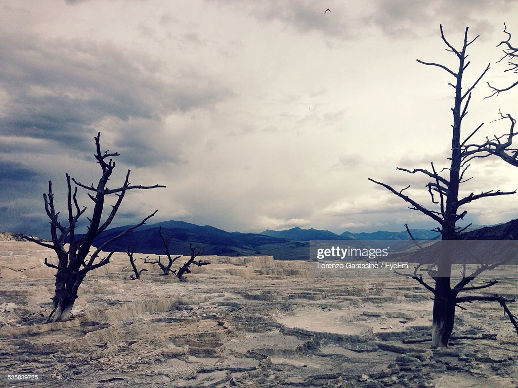 Arid Landscape At Yellowstone National Park