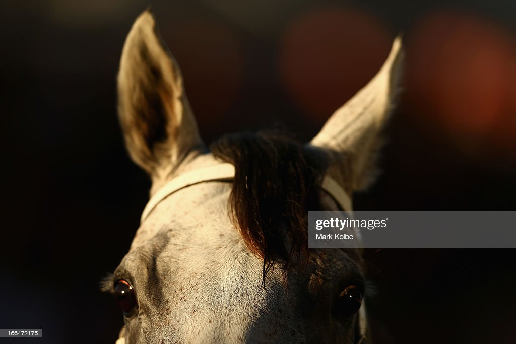 'Arinosa' is seen in the mounting yard after winning race 8 the Belvedere Sapphire Stakes on Australian Derby Day at Royal Randwick Racecourse on April 13, 2013 in Sydney, Australia.