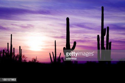 Cactus du désert de l'Arizona Sagauro hiver au coucher du soleil