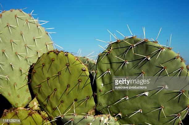 Arizona desert life Cactus