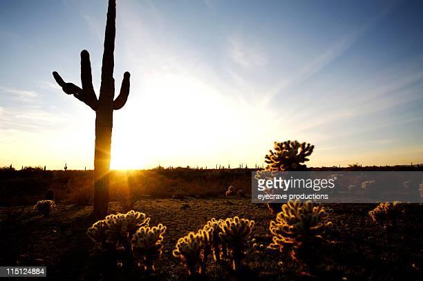 Arizona desert life